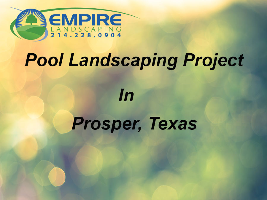 Pool Landscaping in Prosper Texas